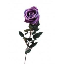 وردة لون ارجواني